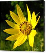 Bright Yellow Flower Canvas Print