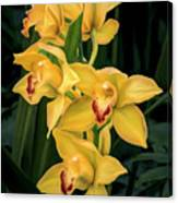 Bright Yellow Orchids Canvas Print