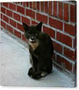 Brighton Cat Canvas Print
