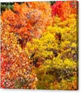 Brillant Fall Canvas Print