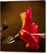Brilliant Hibiscus Canvas Print