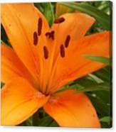 Brilliant Orange Lilly Canvas Print