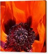 Brilliant Poppy Canvas Print