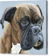 Brindle Boxer Dog - Jack Canvas Print