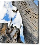 Bristlecone Great Basin Portrait Canvas Print