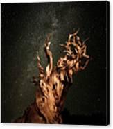 Bristlecone Nights Canvas Print