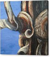 Bristlecone Tree No. 3 Canvas Print