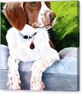 Brittany Spaniel Canvas Print