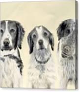 Brittanys  Canvas Print