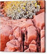 Brittlebush Bloom Canvas Print