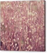 Briza Media Limouzi Decorative Quaking Grass Canvas Print