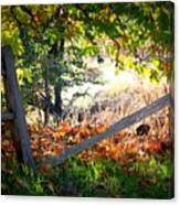 Broken Fence In Sycamore Park Canvas Print