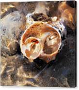 Broken Whelk Shell Canvas Print