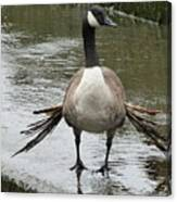 Broken Winded Goose On Lower Weir Canvas Print