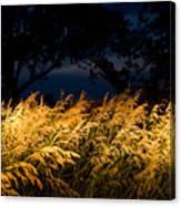 Brome Grass In A Field Near Princeton Canvas Print