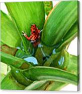 Bromeliad Microhabitat Canvas Print