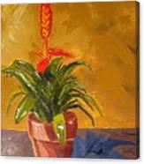 Bromeliad Vriesea Canvas Print