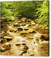 Bronze Stream Canvas Print