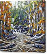 Brook Traversing Wood Canvas Print