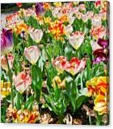 Brookgreen Gardens Tulips Canvas Print