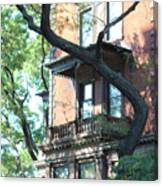 Brooklyn Building And Tree Canvas Print
