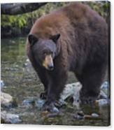 Brother Bear Canvas Print