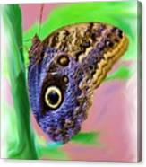 Brown And Blue Butterfly 2 Canvas Print