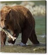 Brown Bear With Salmon Canvas Print