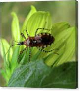 Brown Insect Canvas Print