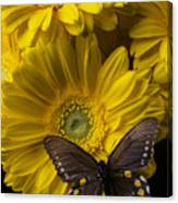 Brown Butterfly On Yellow Daisies  Canvas Print