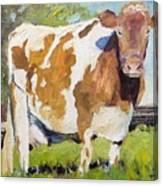 Brown Cow Canvas Print