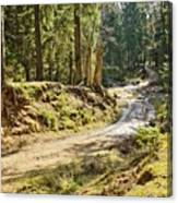 Brown Dirty Road Under Spring Sun Rays Canvas Print