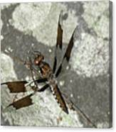 Brown Dragonfly  Canvas Print