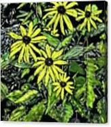Brown-eyed Susans II Canvas Print