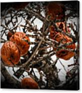 Brown Fruit Abstract Canvas Print