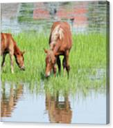 Brown Horse And Foal Nature Spring Scene Canvas Print