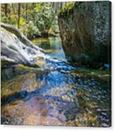 Brown Mountain Forest Canvas Print