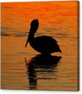 Brown Pelican At Sunset Canvas Print