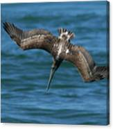 Brown Pelican Fishing Canvas Print