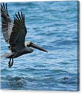 Brown Pelican In Flight Over Water Canvas Print