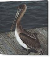 Brown Pelican On Pier 2 Canvas Print