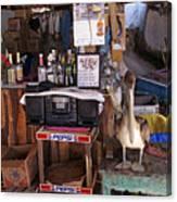 Brown Pelican Visiting Mexican Beach Bar Canvas Print