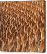 Brown Pelican Wings Canvas Print