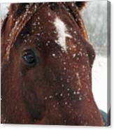 Brown Snow Horse Canvas Print