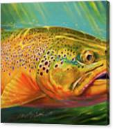 Brown Trout Portrait  Canvas Print