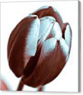 Brown Tulip Canvas Print