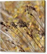 Brown Wildgrass Canvas Print