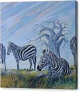Browsing Zebras Canvas Print
