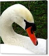 Bruges Swan 2 Canvas Print