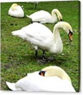 Bruges Swans 2 Canvas Print